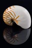 Nautilus-Shell u. Reflexion Stockfoto