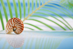 Nautilus shell on wet white glass with reflection Stock Photos
