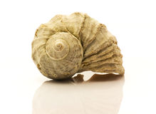 Nautilus shell on white Stock Image