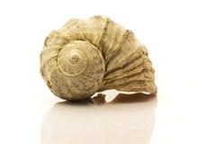 Nautilus shell on white Stock Image