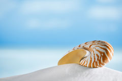 Nautilus shell on white beach sand, against sea waves, Stock Photos
