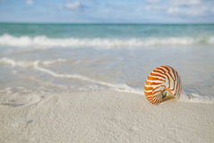 Nautilus shell on white beach sand, against sea waves. Shallow dof Stock Photos