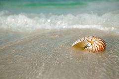 Nautilus shell on white beach sand, against sea waves. Shallow dof Stock Photo
