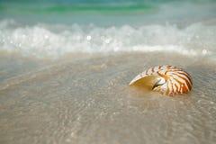 Nautilus shell on white beach sand, against sea waves Stock Photo