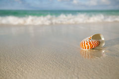 Nautilus shell on white beach sand, against sea waves. Shallow dof Stock Photography