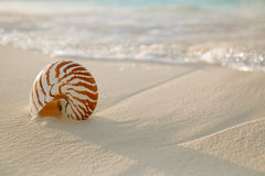 Nautilus shell on white beach sand, against sea waves. Shallow dof Royalty Free Stock Photography