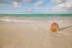 Nautilus shell on white beach sand, against sea waves Stock Photos