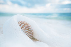 Nautilus shell on white beach sand against sea waves, shallow dof. Nautilus shell on white beach sand rushed by sea waves, shallow dof royalty free stock image