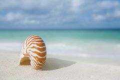 Nautilus shell on white beach sand, against sea waves. Shallow dof, soft focus Royalty Free Stock Photos