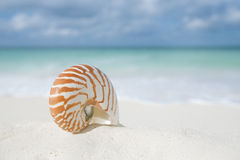 Nautilus shell on white beach sand, against sea waves Royalty Free Stock Image
