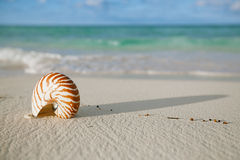 Nautilus shell on white beach sand, against sea waves Royalty Free Stock Photos