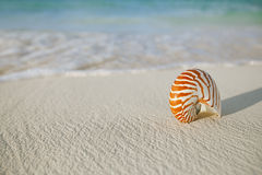 Nautilus shell on white beach sand, against sea waves Stock Photo