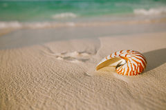 Nautilus shell on white beach sand, against sea waves Stock Images