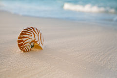 Nautilus shell on white beach sand, against sea waves. Shallow dof, soft focus Stock Photography