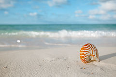 Nautilus shell on white beach sand, against sea waves Stock Photos
