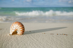 Nautilus shell on white beach sand, against sea waves Stock Photography