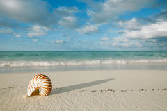 Nautilus shell on white beach sand, against sea waves. Shallow dof, soft focus Stock Images