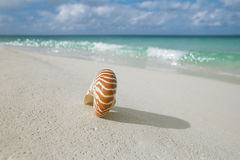 Nautilus shell on white beach sand, against sea waves Stock Image