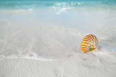 Nautilus shell on white beach sand, against sea waves. Shallow dof, soft focus Royalty Free Stock Image