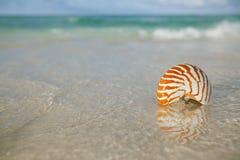 Nautilus shell on white beach sand, against sea waves Royalty Free Stock Photos