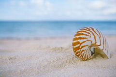 Nautilus shell on white beach sand, against sea waves. Shallow dof, soft focus Royalty Free Stock Photography