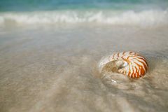 Nautilus shell on white beach sand, against sea waves. Shallow dof, soft focus Stock Image