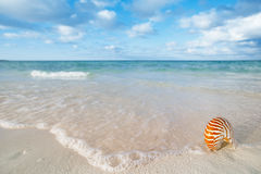 Nautilus shell on white beach sand, against sea waves Royalty Free Stock Photo