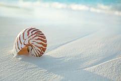 Nautilus shell on white beach sand, against sea waves Stock Image