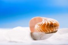 Nautilus shell  on white  beach sand and blue seascape backgroun Stock Photos