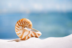 Nautilus shell  on white  beach sand and blue seascape backgroun Stock Images
