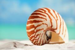 Nautilus shell  on white  beach sand and blue seascape backgroun Royalty Free Stock Photo