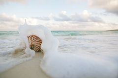 Nautilus shell on white beach sand rushed by sea waves. Nautilus shell on white beach sand in sea waves, shallow dof Stock Photo