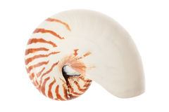 Nautilus shell on white, clipping path Stock Photo
