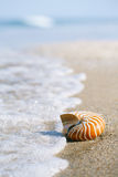 Nautilus shell on white Florida beach sand under the sun light. Nautilus shell on white Florida beach sand under sun light, shallow dof Stock Photo