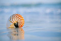 Nautilus shell on white Florida beach sand under the sun light. Nautilus shell on white Florida beach sand under sun light, shallow dof Stock Image
