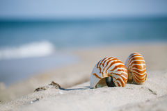 Nautilus shell on white Florida beach sand. Under sun light, shallow dof Royalty Free Stock Images