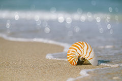 Nautilus shell on white Florida beach sand under the sun light Royalty Free Stock Photo