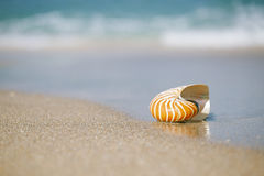 Nautilus shell on white Florida beach sand under the sun light. Nautilus shell on white Florida beach sand under sun light, shallow dof Royalty Free Stock Image
