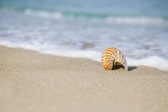 Nautilus shell on white Florida beach sand under the sun light Stock Images