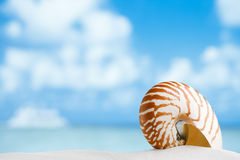 Nautilus shell on white Florida beach sand under the sun. Nautilus shell on white Florida beach sand under sun light, shallow dof Stock Photos