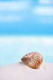 Nautilus shell on white Florida beach sand under the sun light. Nautilus shell on white Florida beach sand under sun light, shallow dof Stock Images