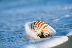 Nautilus shell on white Florida beach sand under the sun light. Nautilus shell on white Florida beach sand under sun light, shallow dof Stock Photos