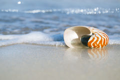 Nautilus shell on white Florida beach sand under the sun light. Nautilus shell on white Florida beach sand under sun light, shallow dof Royalty Free Stock Photos