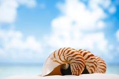 Nautilus shell on white Florida beach sand under the sun light Royalty Free Stock Photos