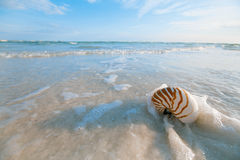 Nautilus shell on white Florida beach sand under the sun light. Nautilus shell on white Florida beach sand under sun light, shallow dof Royalty Free Stock Images