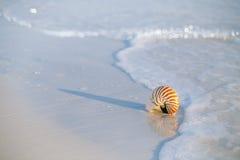 Nautilus shell on white Florida beach sand under the sun light Royalty Free Stock Photo