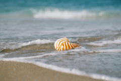 Nautilus shell on white Florida beach sand under the sun light. Nautilus shell on white Florida beach sand under sun light, shallow dof Royalty Free Stock Photo