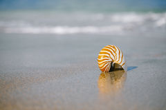 Nautilus shell on white Florida beach sand under the sun light. Nautilus shell on white Florida beach sand under sun light, shallow dof Royalty Free Stock Photography
