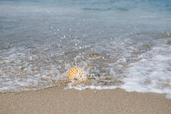 Nautilus shell on white Florida beach sand under the sun light. Nautilus shell on white Florida beach sand under sun light, shallow dof Stock Photography