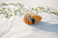 Nautilus shell on white Florida beach sand under the sun light Royalty Free Stock Photography
